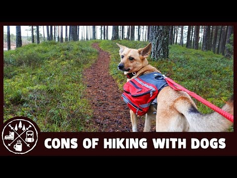 3 reasons why you shouldn't hike with your dog (and why I still do)