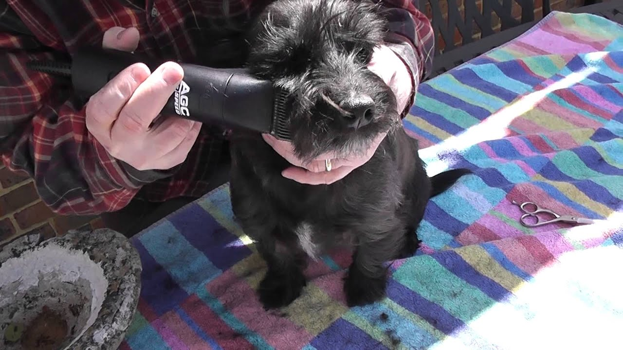 Diy dog grooming watch how easy it is to make your dog look 10 diy dog grooming watch how easy it is to make your dog look 10 years younger youtube solutioingenieria Images