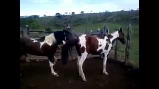 Video Hard Mating Horses go Deep download MP3, 3GP, MP4, WEBM, AVI, FLV November 2018