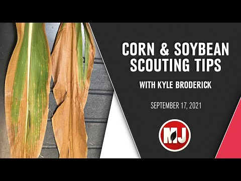 Corn & Soybean Scouting Tips | Kyle Broderick | September 17, 2021