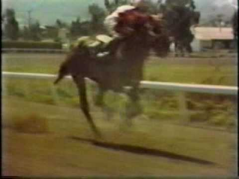 Herb Alpert & the TJB Tijuana Taxi Original Video 1965