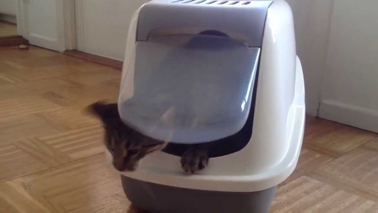 the new hooded litter box