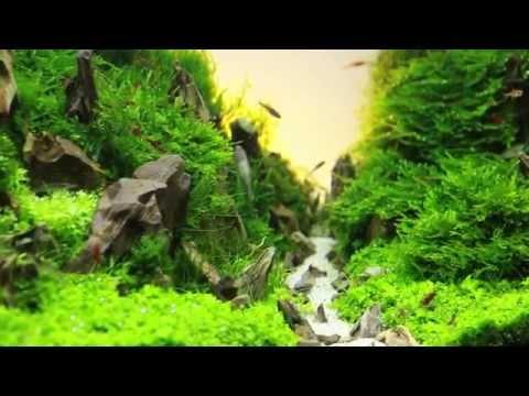 GenepoolAquarium live special : การจัดประกวดพรรณตู้ไม้น้ำขนาดเล็ก ( ACT Aquascape Contest 2014 )