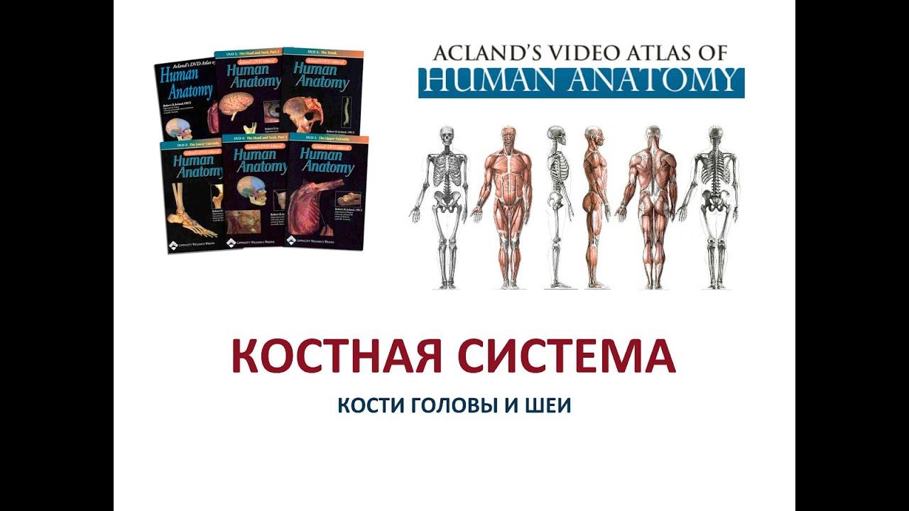 Acland Anatomy Videos Free Choice Image - human body anatomy