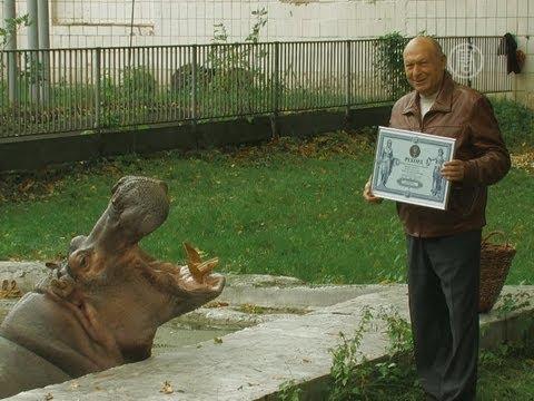 Самый старый бегемот живет в Киеве (новости)