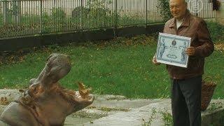 Самый старый бегемот живет в Киеве (новости)(http://www.ntdtv.ru Самый старый бегемот живет в Киеве. В Киевском зоопарке живет самая старая бегемотиха. Ей скоро..., 2013-09-20T08:59:39.000Z)