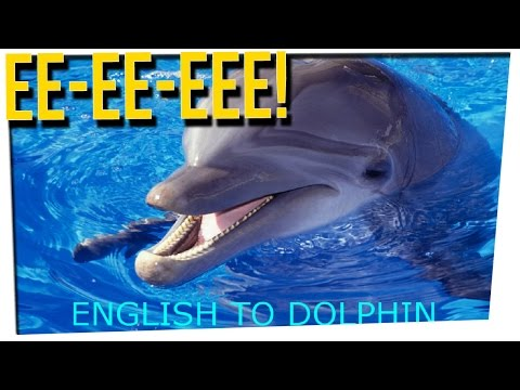 WEEKEND SCRAMBLE - We Could Translate Dolphin Language by 2021?! ft. DavidSoComedy