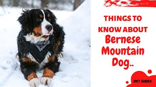 Bernese Mountain Dog: 8 Things to Know About this Striking Breed