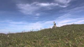 The Closest View Of Puffins On Land - The Elliston Puffin Site - Helen's Testimony