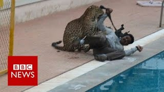 Indian leopard on the loose ... again - BBC News MP3