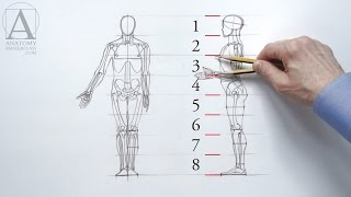 Human Figure Proportions - Anatomy Master Class