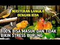 Masteran Jeda Cililin Lovebird Kapas Tembak Cucak Jenggot Kenari  Mp3 - Mp4 Download