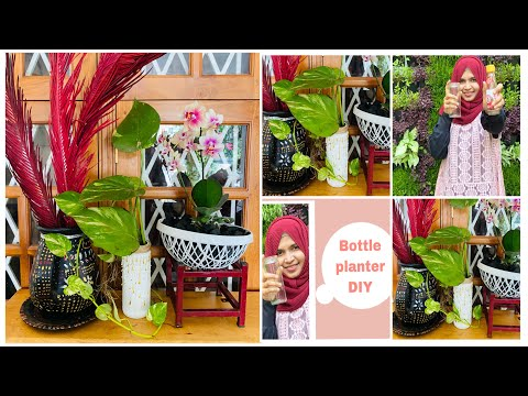 Easy Bottle Planters Idea || Best Reuse Idea Of old Bottle ||Bottle Craft || passion and profession