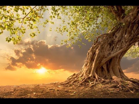GOOD MORNING MUSIC ➤ 528 Hz Strong Positive Energy ➤ Wake Up Meditation Music - Spiritual Morning