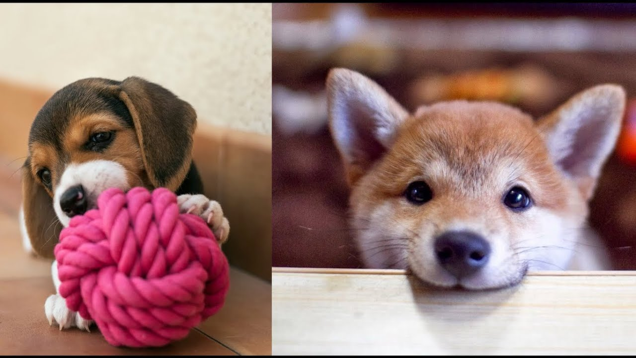 Funny animals   Dogs 🐶  Cute baby animals Videos Compilation cutest moment of the animals 😍❤️🐾
