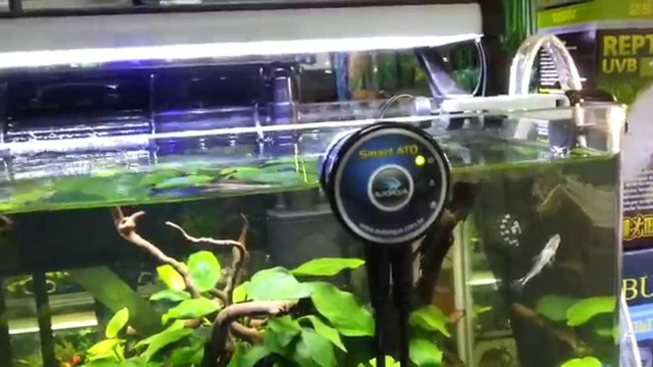 17 июн 2014. Эта простая система, может автоматически доливать воду в ваш аквариум и поддерживать всегда должный уровень.