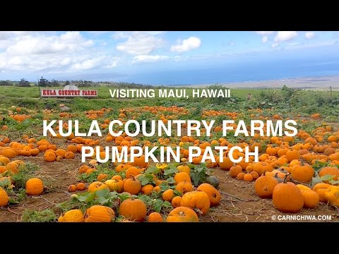 Kula Country Farms Pumpkin Patch | Maui, Hawaii | © CarNichiWa.com