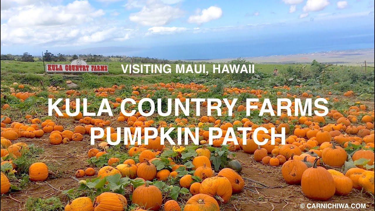 Kula Country Farms Pumpkin Patch   Maui, Hawaii   CarNichiWa.com - YouTube
