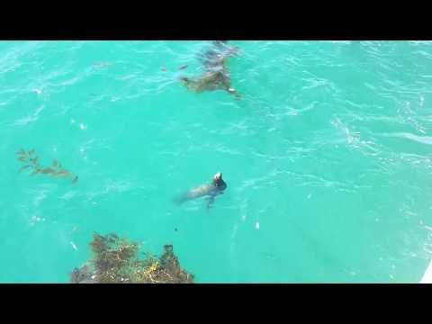 Sea Lion Saying Hello! (Redondo Beach, CA)