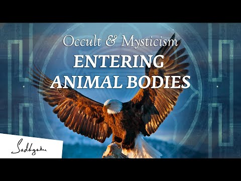 Can You Enter Into Animals Bodies & Control Them? – Sadhguru | Occult & Mysticism Ep2 from YouTube · Duration:  9 minutes 5 seconds