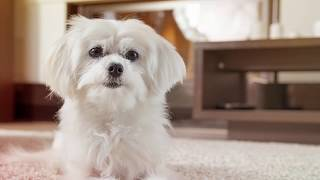 Собака чешется. Что делать? Причины и лечение блошиного дерматита у собаки