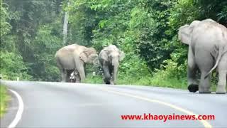 Gambar cover wild elephant chasing vehicles at the Katharagama (Sri lanka)