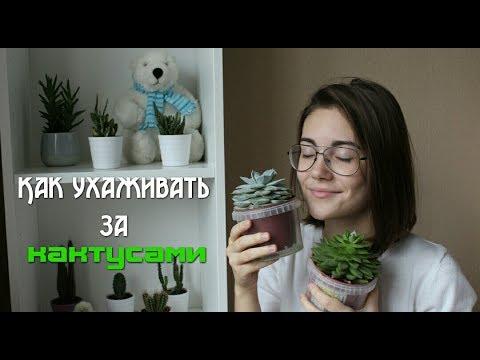 Как часто нужно поливать кактус в домашних условиях