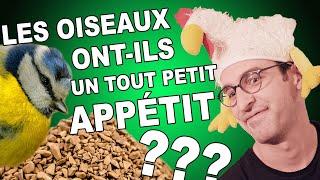 """IDÉE REÇUE #37 : Les oiseaux ont-ils un """"appétit d'oiseau"""" ?"""
