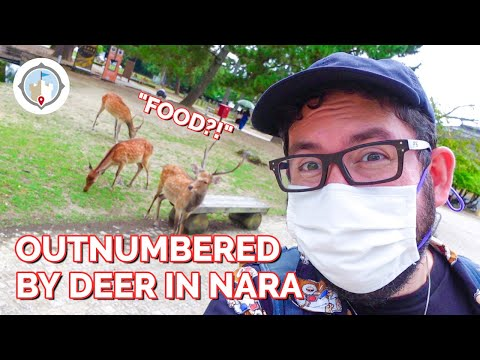 Outnumbered by Deer in Nara, Japan | What Japan Looks Like Without Tourists