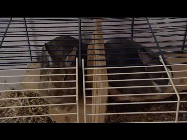 De Zomerhof: Dierentolk Mieke Zomer communiceert  met konijn Bunny voor de VPRO