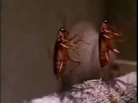 la cancion el flow de la cucaracha jadiel