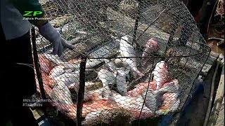 Tarik perangkap ikan dapat ikan merah dan ikan kerapu Bubu mania episode 10