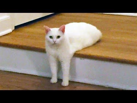 Chats rigolos garantis pour vous faire rire youtube - Images de chats rigolos ...