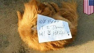 Убийцы собачки оставили ужасную записку хозяевам