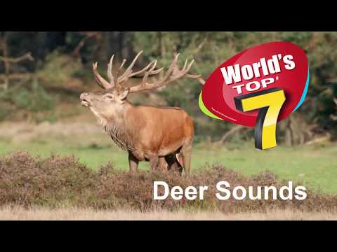 Deer sounds TOP 7 - Number 1 will make you surprise