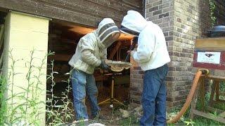Bees underneath a house in Bush, Louisiana