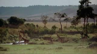 Repeat youtube video África El Serengueti