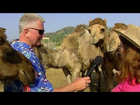 Visiting With Huell Howser: Camel Dairy