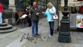 Туристы в Дрездене кормят воробьев с рук.