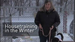 Pet Dish Pet Tips - Housetraining in the Winter
