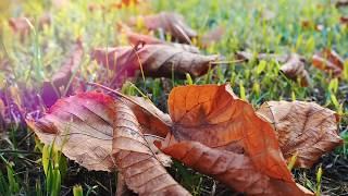 Light & palms. Absolute relax. Autumn fall in Batumi