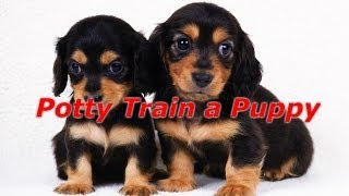 How To Potty Train A Puppy - How To Potty Train A Puppy Fast