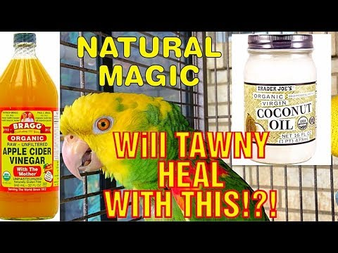 Healing Tawny | Talking Double Yellow-Headed Amazon | Day 2 Update