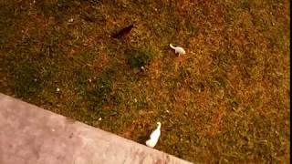 Кто там? Белые котята гуляют! Для детей!For kids!