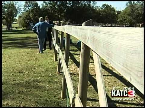 Horses helping with military veterans and PTSD