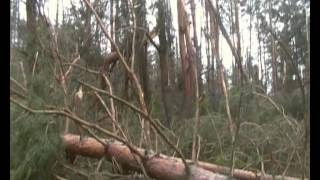 Ураган Евминка (Черниговская обл) 04 июля 2012 11(, 2012-06-05T11:06:24.000Z)