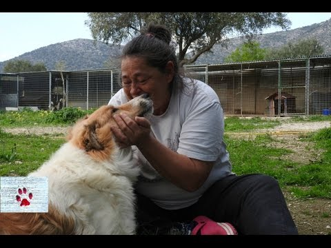 Meet the woman who dedicates her life to saving stray dogs