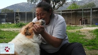 Meet the woman who dedicates her life to saving stray dogs thumbnail