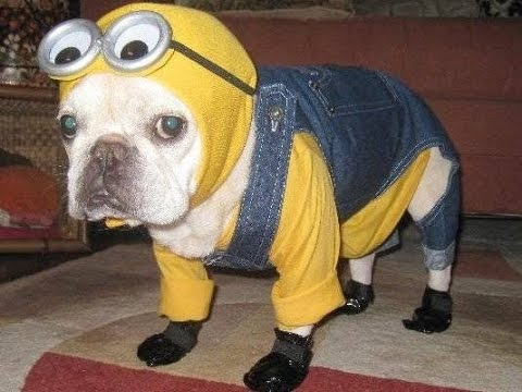 20 halloween costumes for pets scary but cool