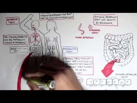 Mucosal Immunity Overview